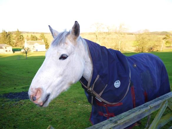 Oxton horse
