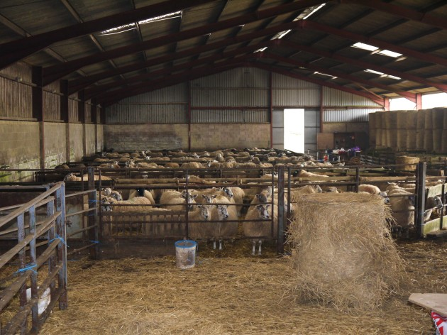 Sheep Shed Plans For 1000 Sheep shed roof design house